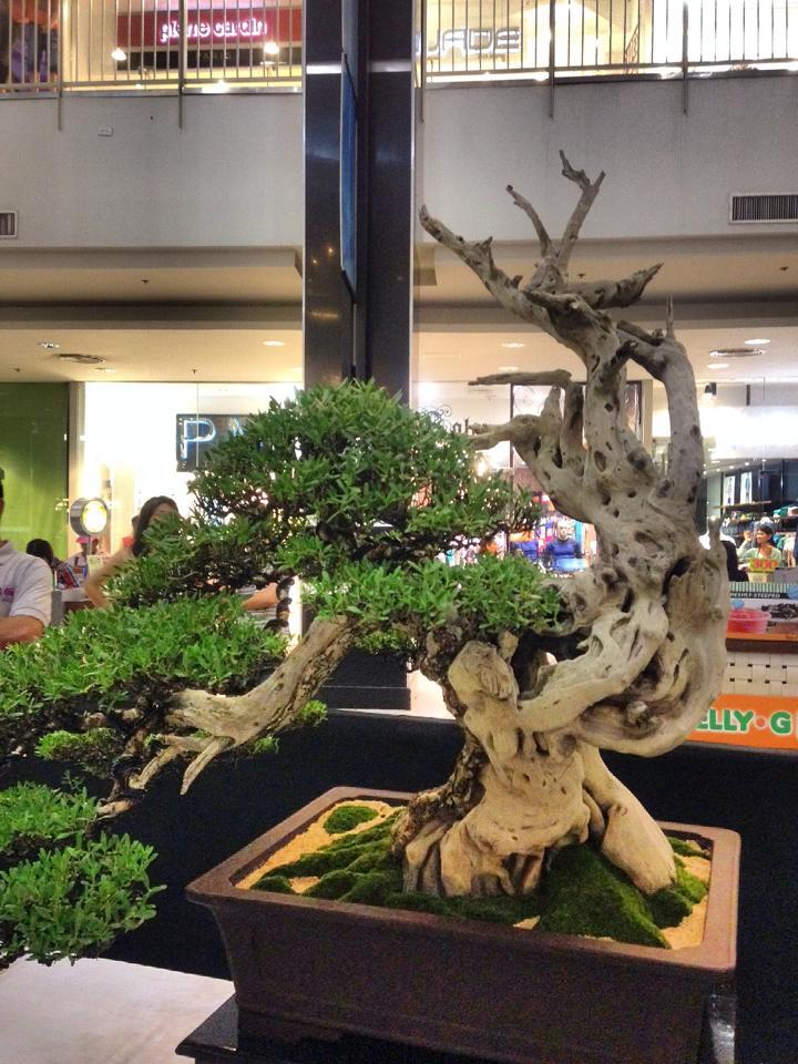 KHBS bonsai 10th show 99343110