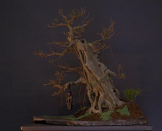 The Fairy Tale Bonsai Style Dsc_1210