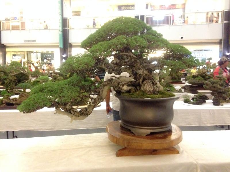 KHBS bonsai 10th show Image13