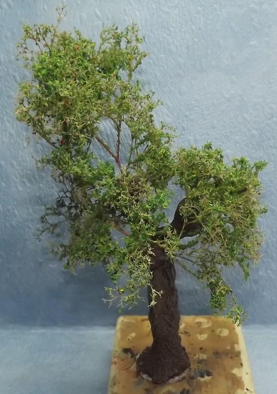 réalisation d'un arbre en stuco Dscf7761