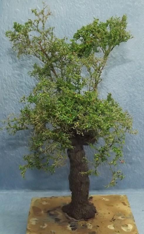 réalisation d'un arbre en stuco Dscf7762