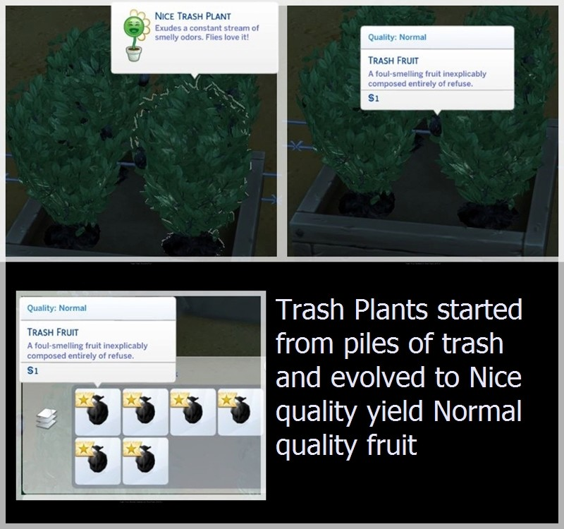 Plant Quality and Harvested Fruit Quality Do Not Match Trash_10