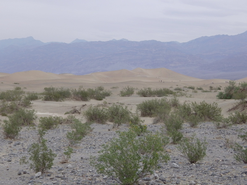 DEATH VALLEY Imga0614