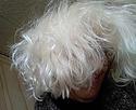 Celles qui ont des cheveux blancs! Img_2030