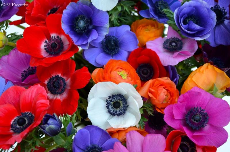 les fleurs - Page 3 Fleurs10