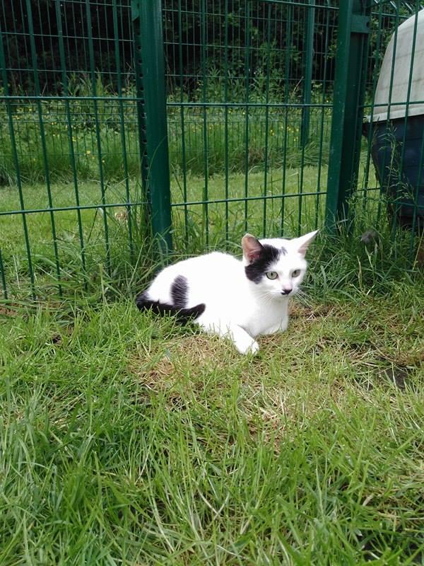 Urgent!! cherche Co-voiturage chat de fourrière de st Germain du pinel à Concarneau pour le 19/05! - Page 2 18622910