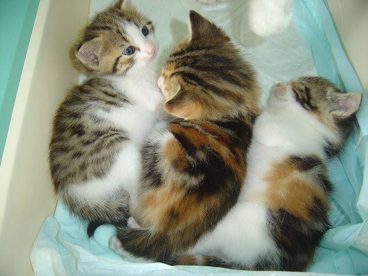 EXTRÊME URGENCE fourrière le 16 juin pour une chatte et ses 3 bébés 19141512