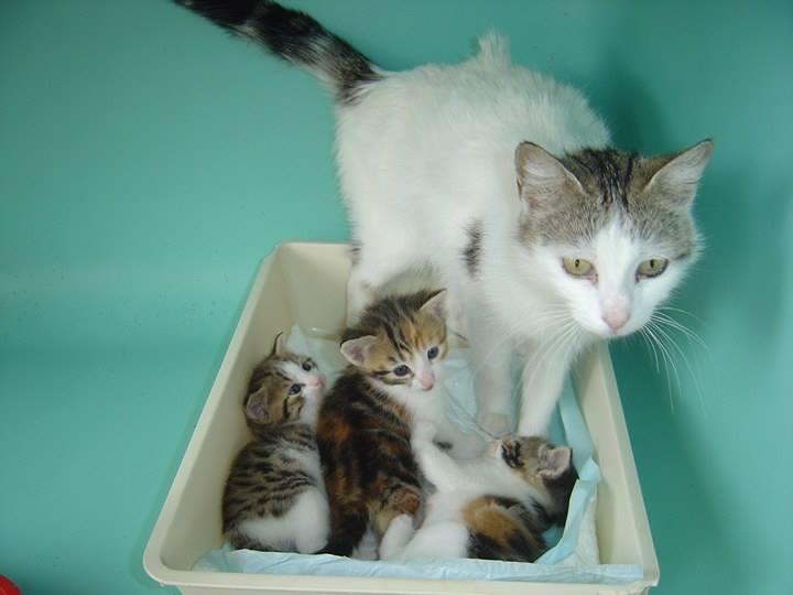 EXTRÊME URGENCE fourrière le 16 juin pour une chatte et ses 3 bébés 19190912