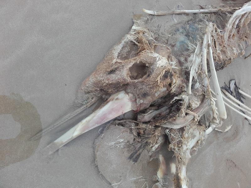 il est à qui le squelette ?? 20170313