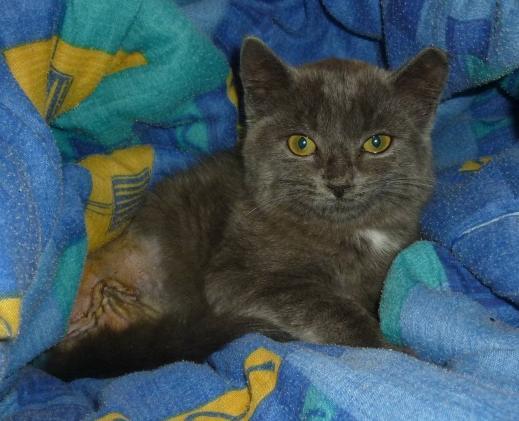 Cliquez pour nos chats sur Actuanimaux ! - Page 4 Choupi10