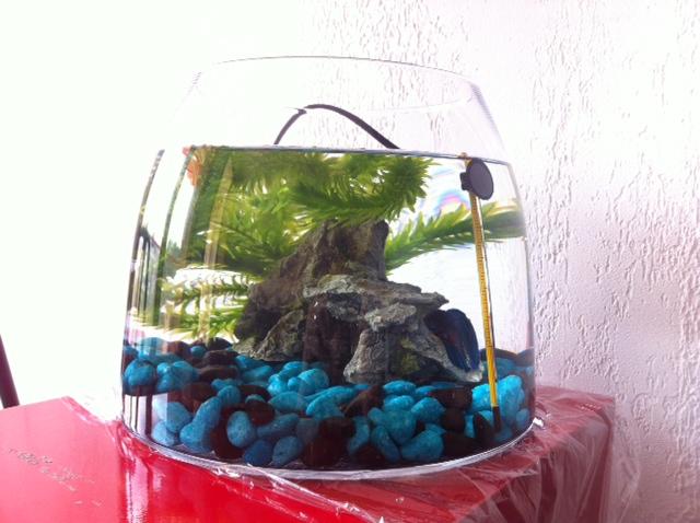 Question sur futur aquarium  Photo_15