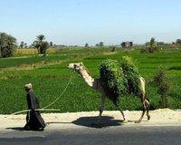 ◘◘◘ نبذة عن قرية الحمام أبنوب محافظة أسيوط ◘◘◘ 339