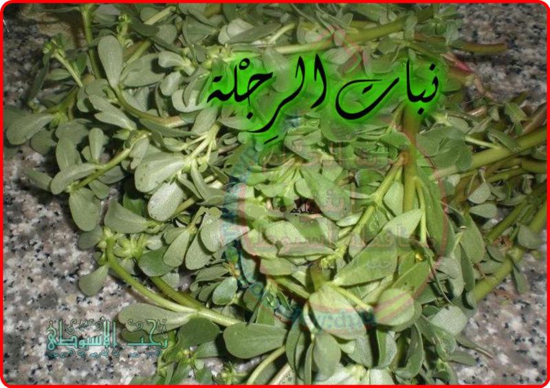 أهم فوائد نبات الرِجْلة . 748