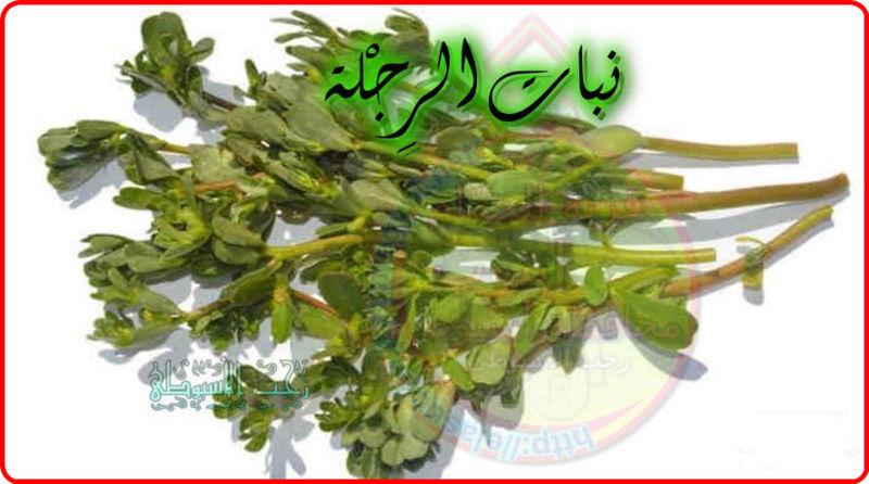 أهم فوائد نبات الرِجْلة . 835