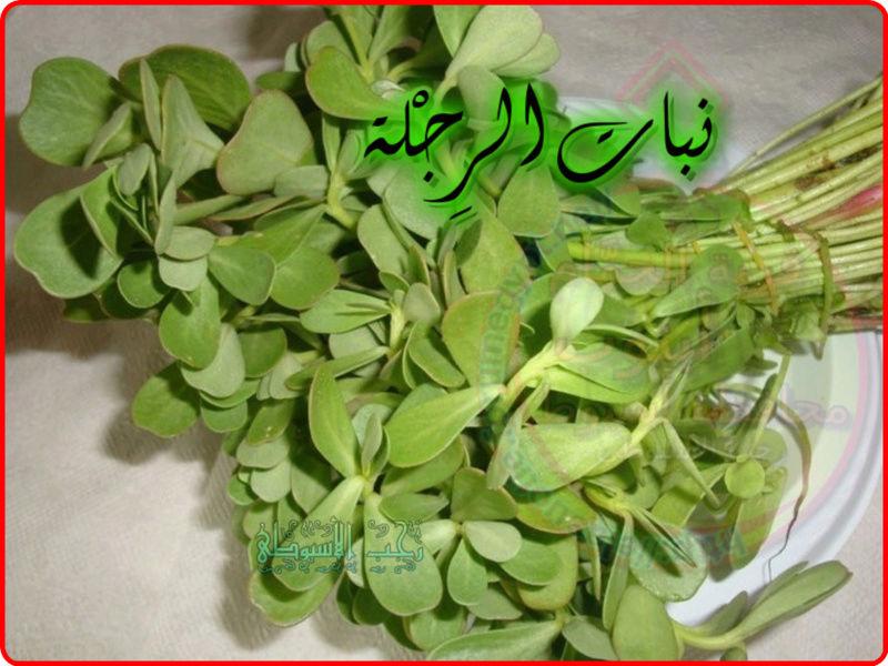 أهم فوائد نبات الرِجْلة . 929