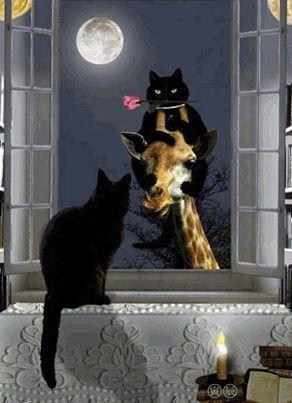 bonzour bonne zournée et bonne nuit notre ti nid za nous - Page 38 0b4bd612