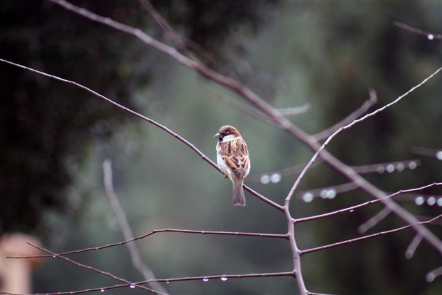 bonzour bonne zournée et bonne nuit notre ti nid za nous - Page 2 Oiseau10