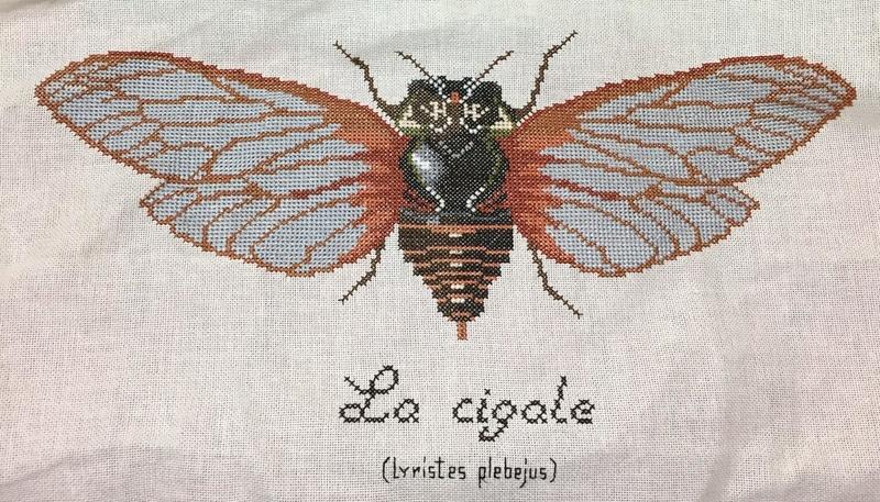 Galerie de Lilubelle - Page 22 Cigale12