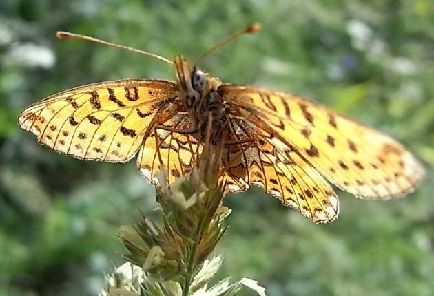 fil(et) à papillons - Page 11 Flore_11