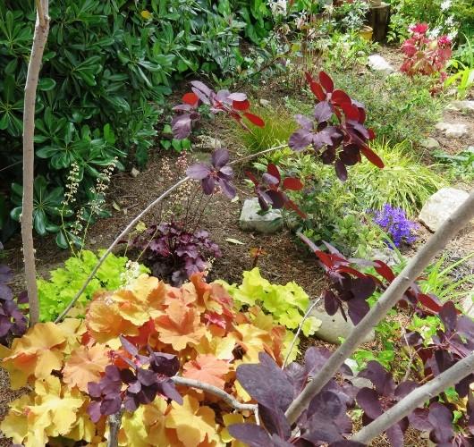 C'est le printemps dans nos jardins ! Belles associations Img_5213