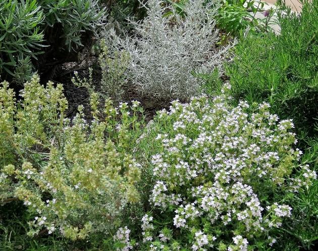 C'est le printemps dans nos jardins ! Belles associations Img_5312