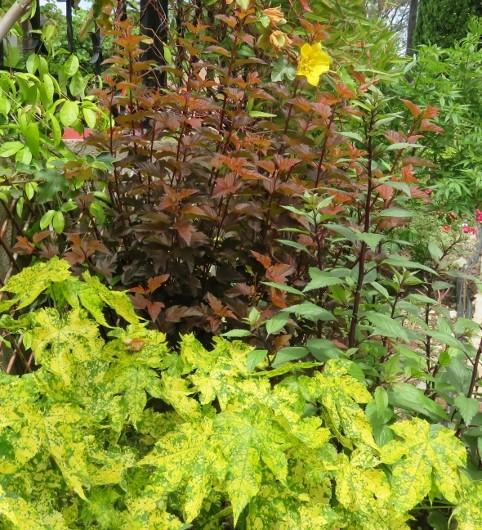 C'est le printemps dans nos jardins ! Belles associations Img_5313