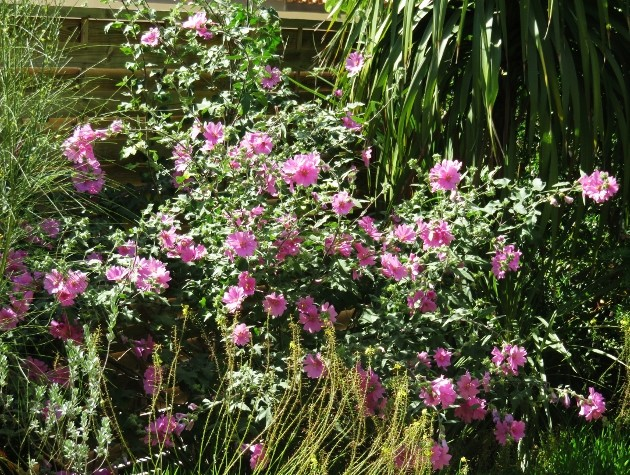 ces quelques fleurs de nos jardins Img_5513