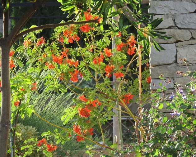 ces quelques fleurs de nos jardins - Page 2 Img_5710