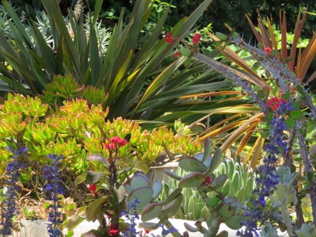 ces quelques fleurs de nos jardins - Page 2 Img_5713