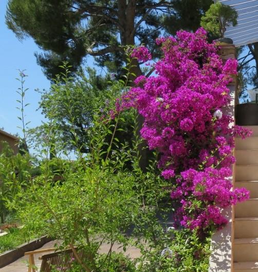 ces quelques fleurs de nos jardins - Page 2 Img_5714