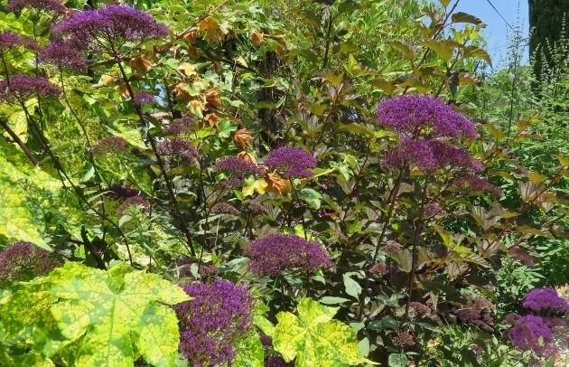 ces quelques fleurs de nos jardins - Page 3 Img_5820