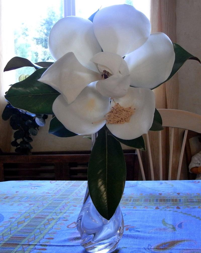 ces quelques fleurs de nos jardins Juin_229