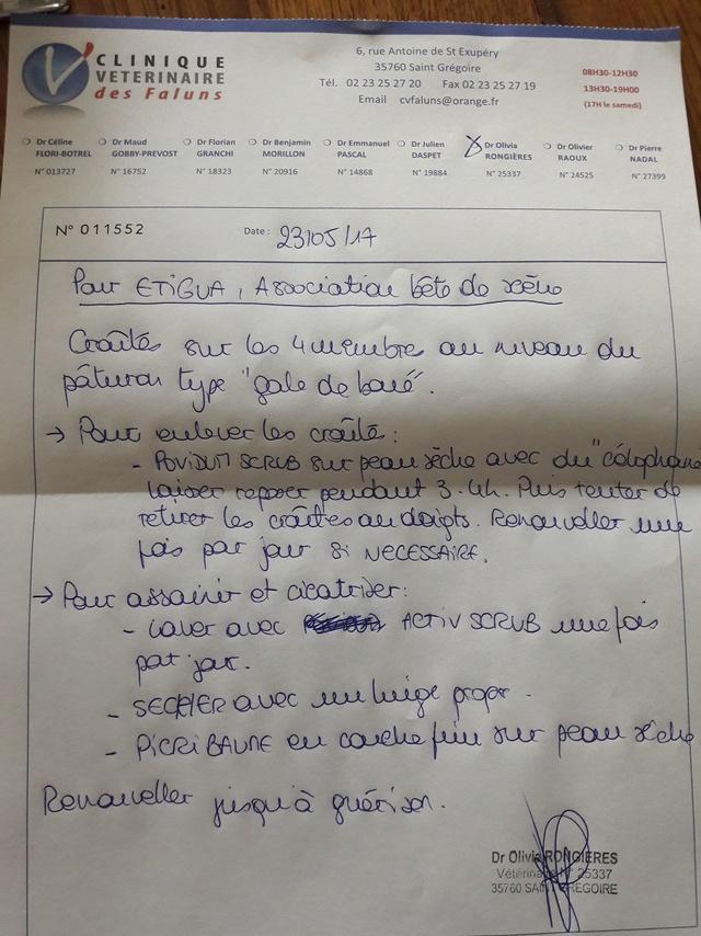 ETIGUA DES DAULES - jument alezane - 27 ans - Page 2 _copie20
