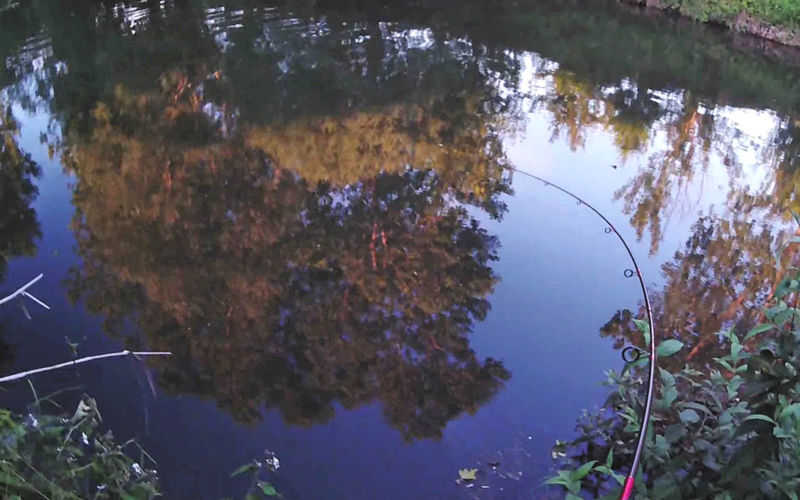 Petite pêche rapide !  2017-012