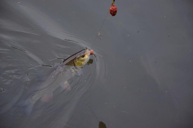 Petite pêche rapide !  Dsc_0210