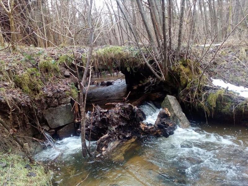 Terres d'Arvernis Ruisse10