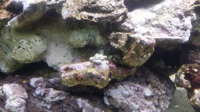 Un nom pour mes 2 coraux ? 17155310