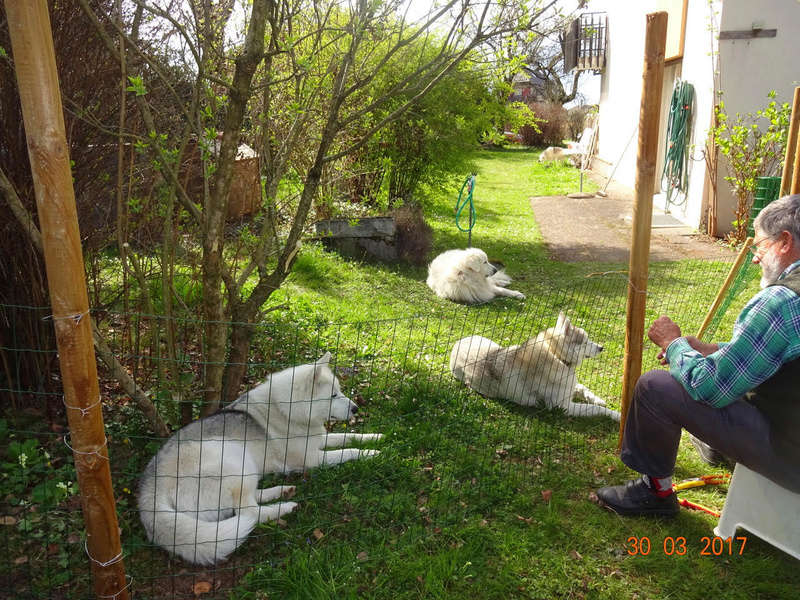 Nouveau parc clôturé pour les 3 Huskies adoptés et la chienne Patou 113