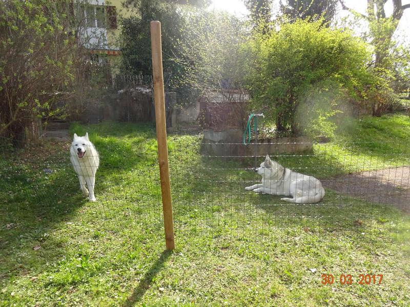 Nouveau parc clôturé pour les 3 Huskies adoptés et la chienne Patou 214