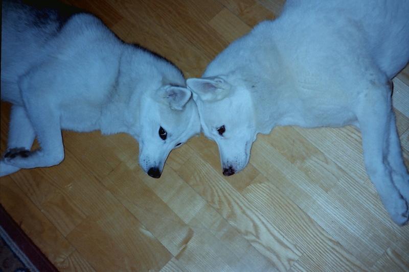 Adopter un 2ème chien tout en maintenant l'équilibre du 1er 55_sas10