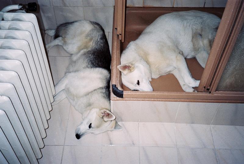 Adopter un 2ème chien tout en maintenant l'équilibre du 1er 56_sas10