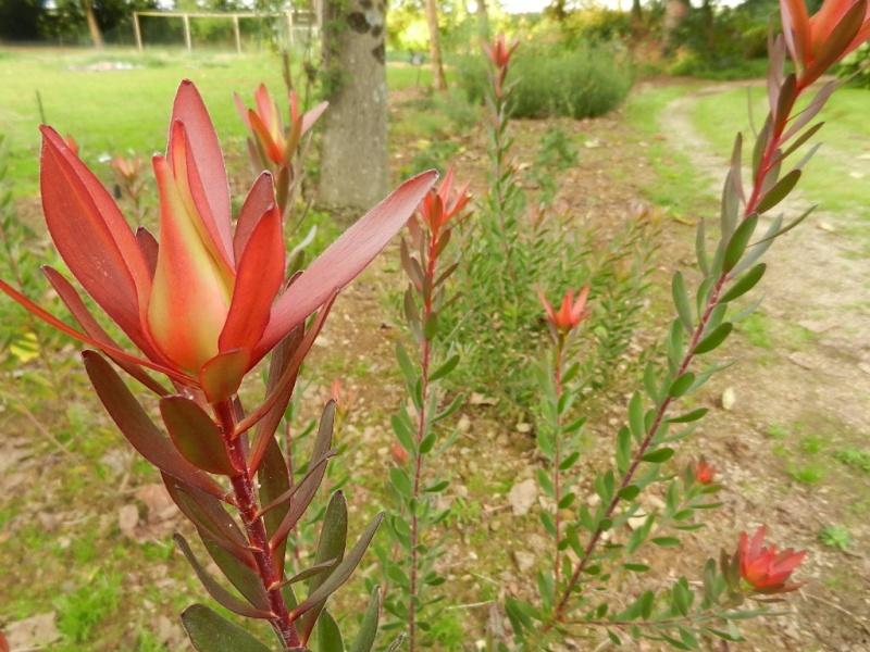 floraisons d'octobre - Page 9 00310