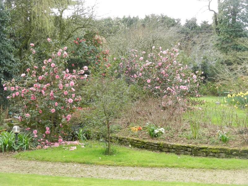 Aperçus de mon jardin Breton - Page 5 00513