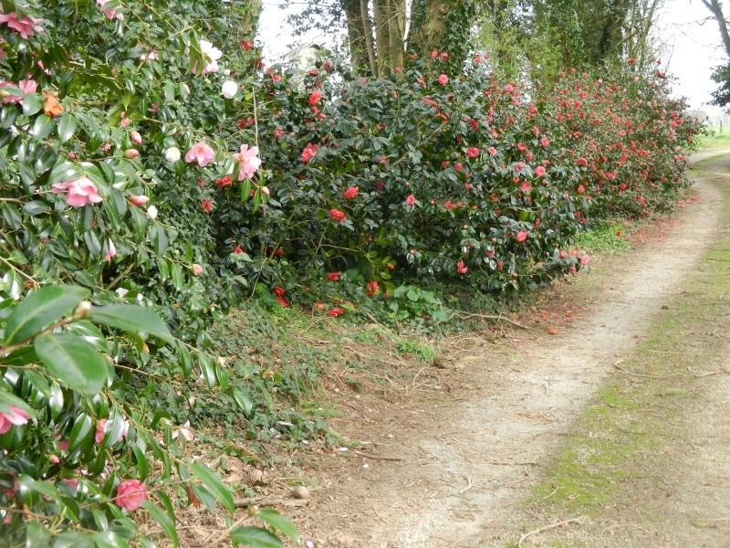 Aperçus de mon jardin Breton - Page 5 00614