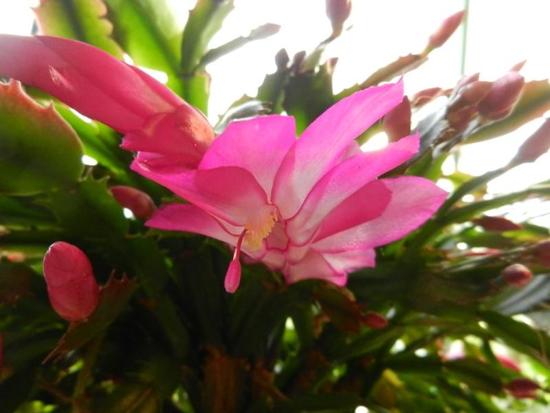 Floraisons d'intérieur  - Page 5 01110