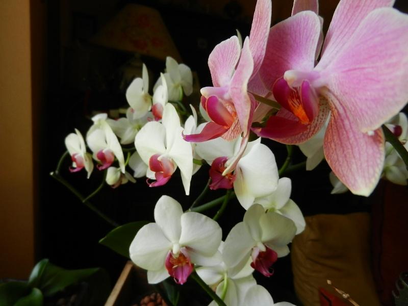 Floraisons d'intérieur  - Page 5 01510
