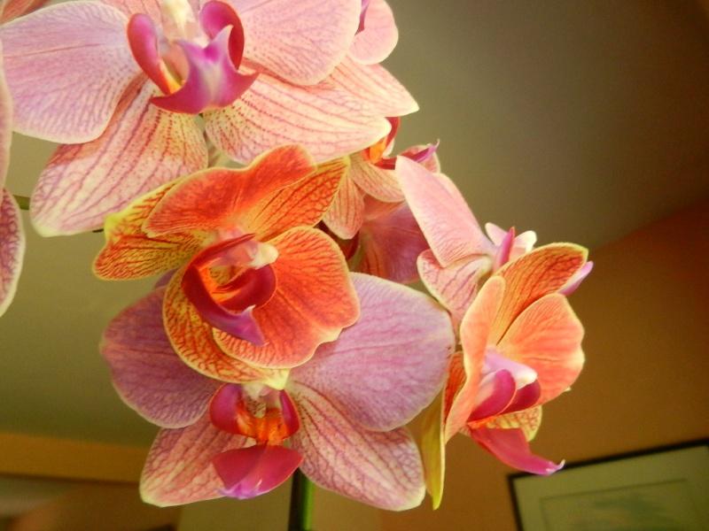 Floraisons d'intérieur  - Page 5 01710
