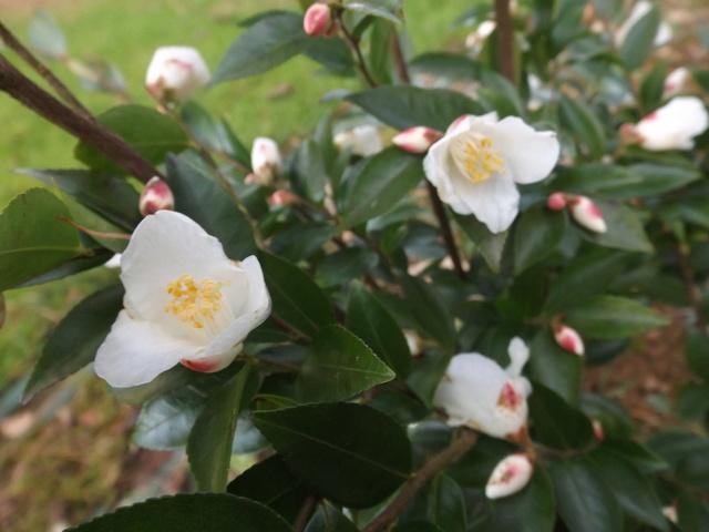 Floraisons de février - Page 14 Dscf4814