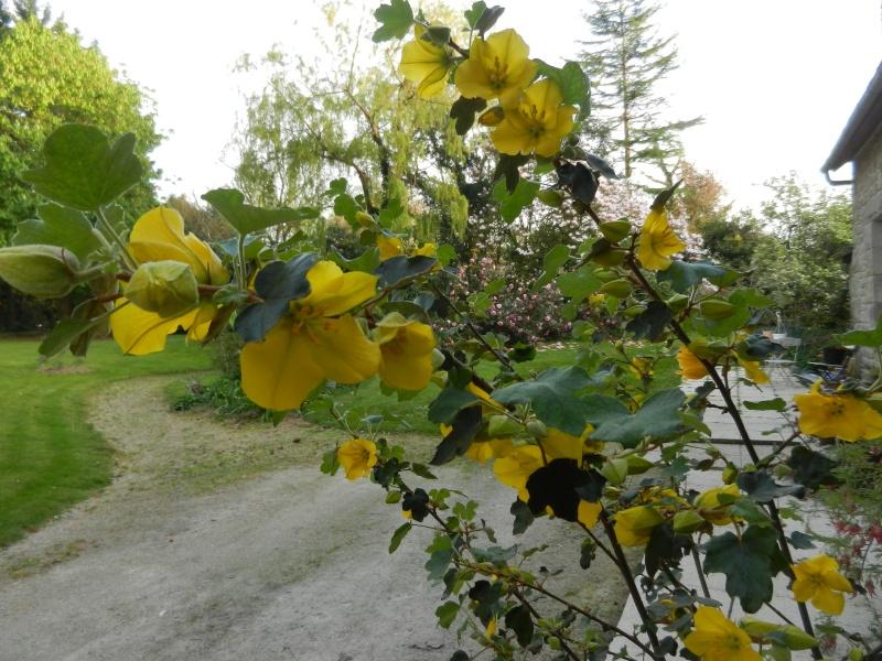 Aperçus de mon jardin Breton - Page 5 Fremon12