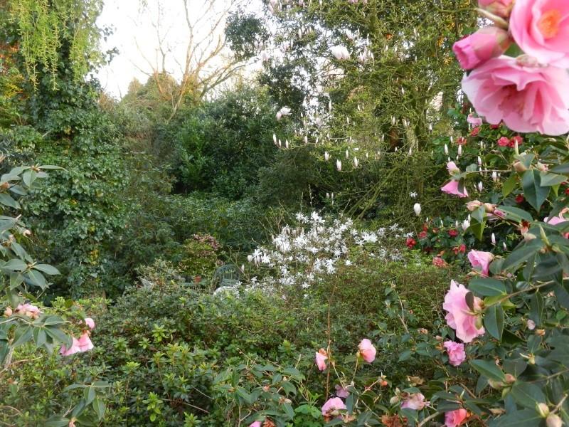 Aperçus de mon jardin Breton - Page 5 Vue_du15